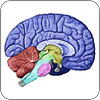Brain Injury Biomarkers